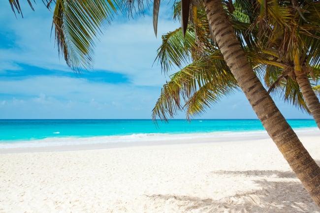 beach_palm_narrow