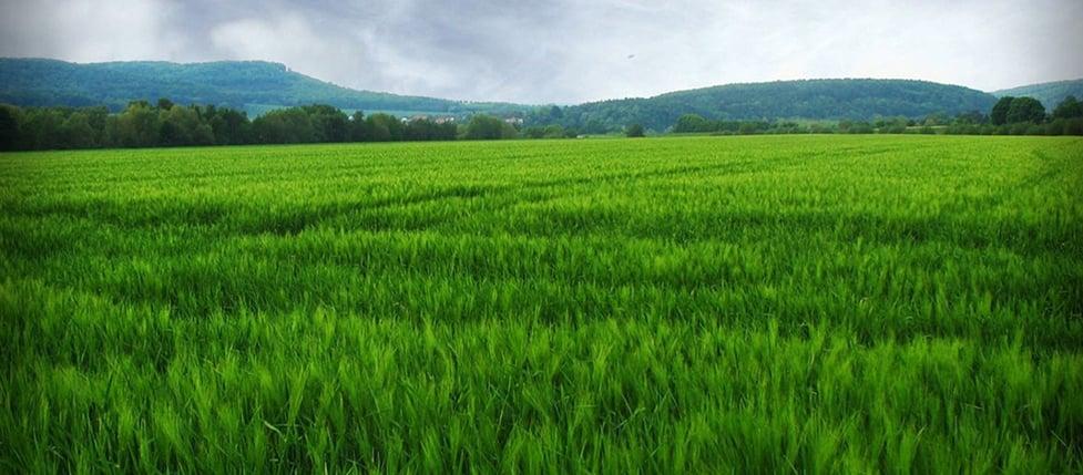 field_wide