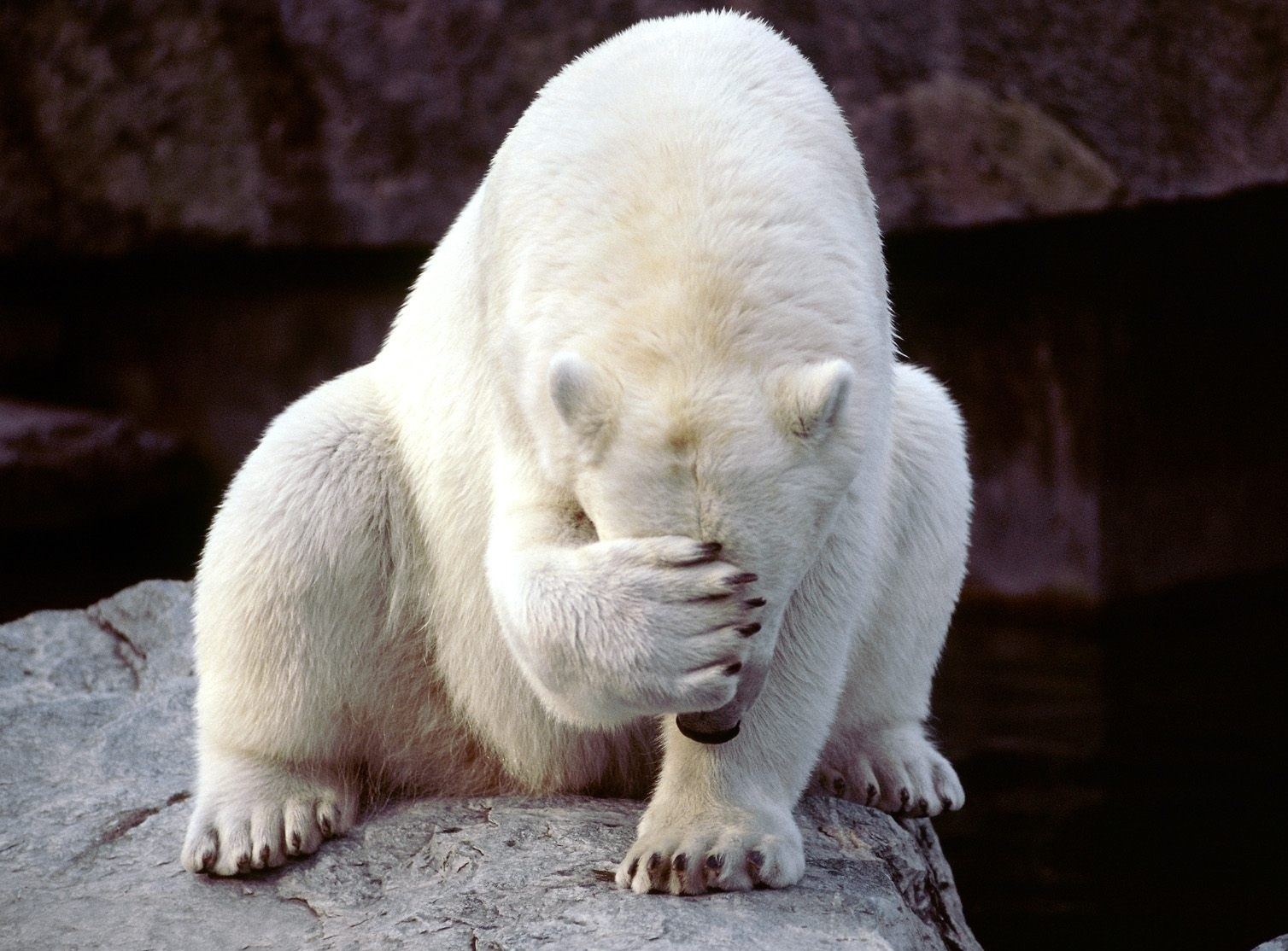 frustrated_bear-558697-edited.jpg